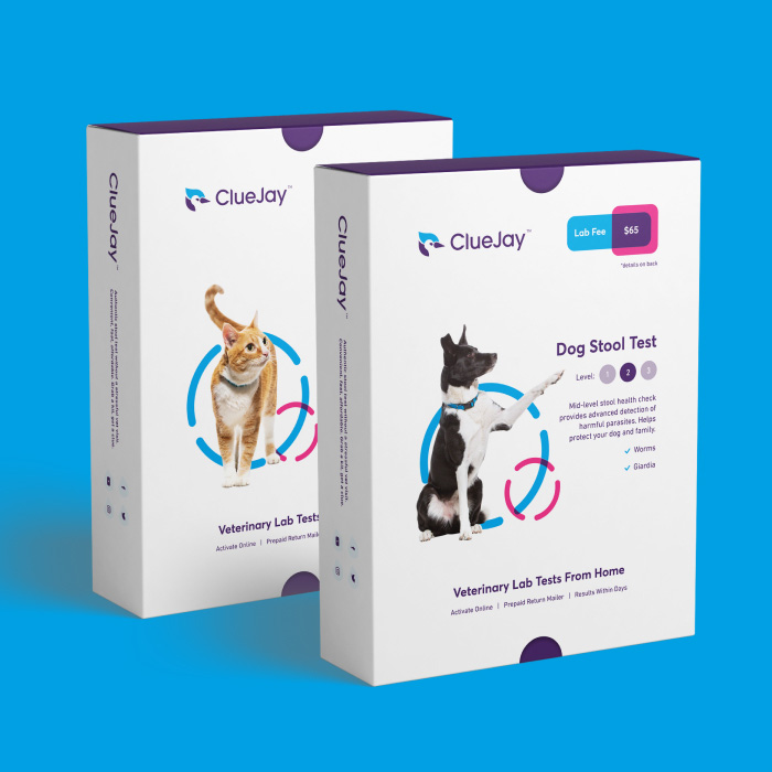ClueJay Branding Project