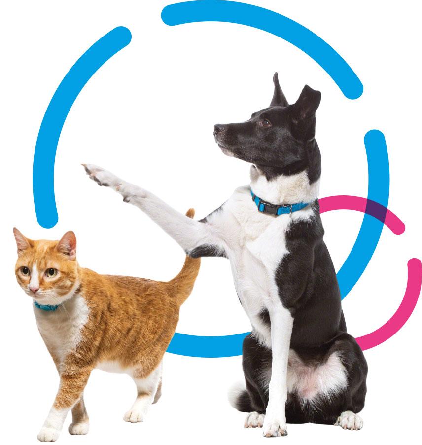 ClueJay pets