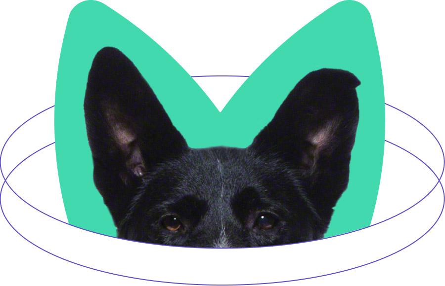 Maranda dog ears M